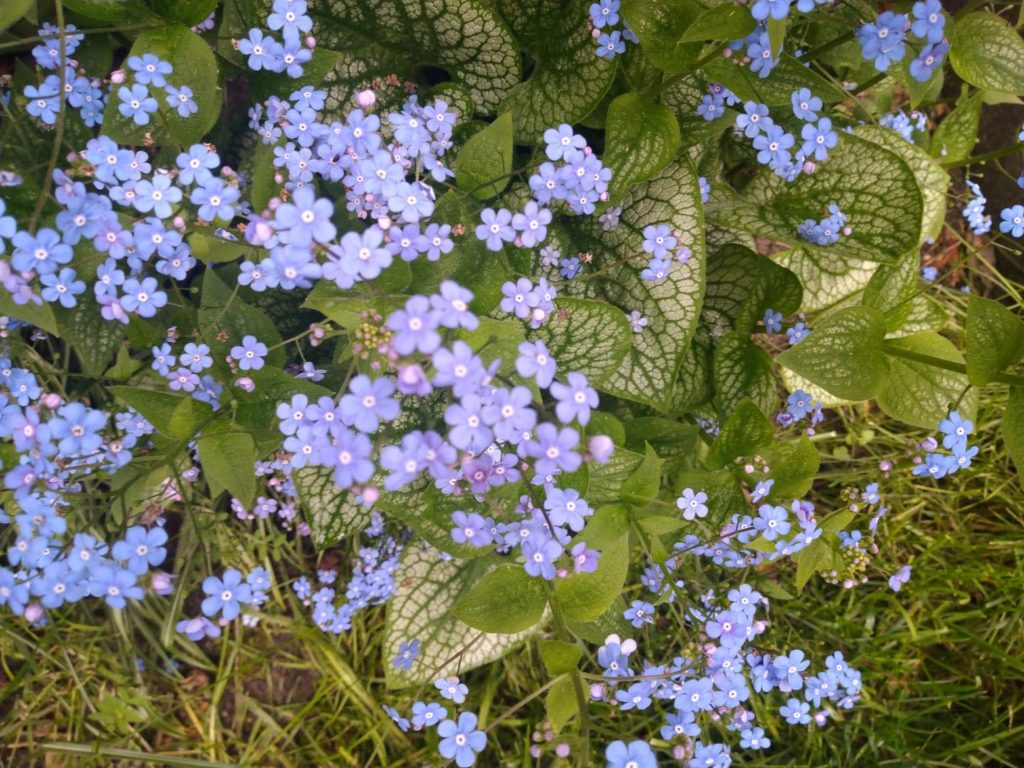 kwiatki-1024x768.jpg