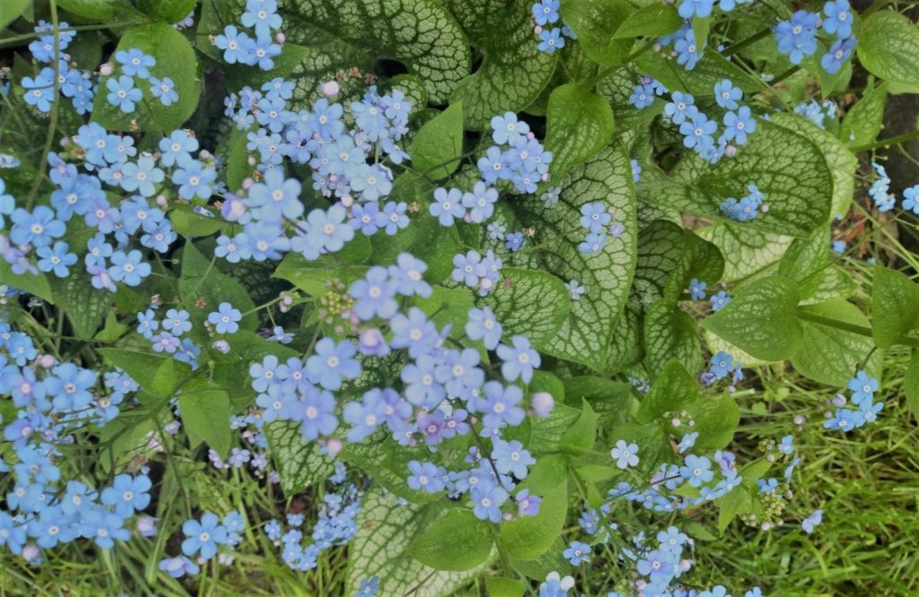 kwiaty2a-1024x666.jpg